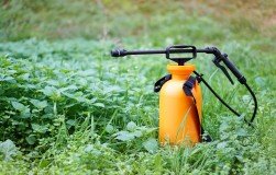 Какие гербициды применяют на огороде