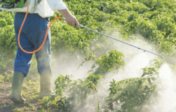Правила использования инсектицидов