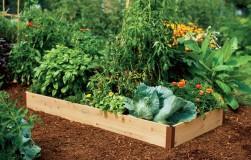 Осторожно с содой в огороде