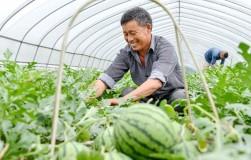 Садово-огородная химия из Японии. Стоит попробовать
