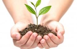 Растениям – защита, почве – качество