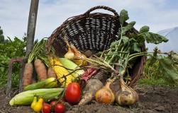 Важный момент повысить урожай – цветение овощных культур