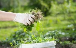 Удобрение на «зеленом газу» – лучшее для растений