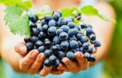 Проще некуда: микроэлементы и урожай винограда