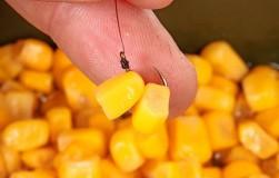 Растительные насадки: как правильно насадить горох, кукурузу и перловку