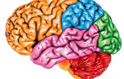 ПЯТЬ вещей, которые развивают мозг, но вы об этом не знали