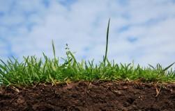 Правда и ложь: о глинистой почве