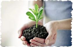 Сера – незаменимый микроэлемент для огорода