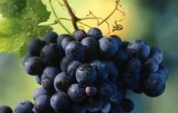 Жадничать нельзя: нормировка винограда гроздями