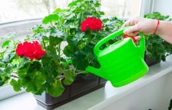 Общие правила полива комнатных растений