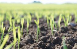 Виды селитры и их влияние на почву