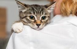 Алиментарный гиперпаратиреоз кошек