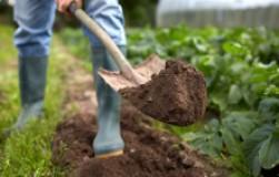 Готовим сад к будущему урожаю