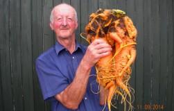 Цель – вырастить гигантскую морковь