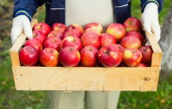Кто яблоки сохранит? Хрен знает