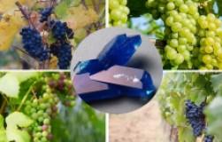 Железный купорос или медный: что для винограда лучше?