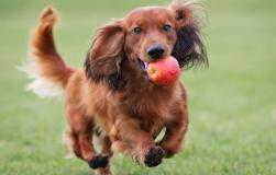 Как понять настроение собаки по ее хвосту