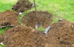 Нужно ли «заправлять» посадочную яму