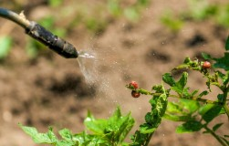Инсектициды: если нет разницы, зачем платить больше