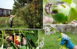 Биостимуляторы и виталайзеры для растений