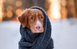 Как подготовить питомца к зиме