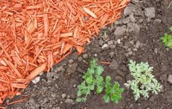 Заменим органическую мульчу неорганической