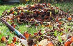 Растительные остатки: удобрение или опасность