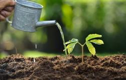 Если марганец в почве в избытке