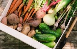 Морозостойкие овощи: урожай до весны