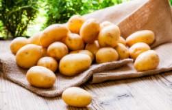 Как вырастить суперурожай картофеля