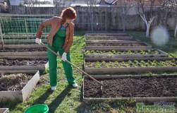 Суперхиты для выращивания на огороде