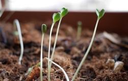 Зимний тест на всхожесть семян