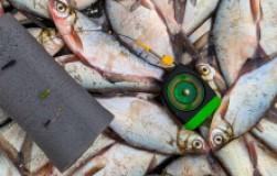 Тактика поиска и ловли рыбы на гирлянду