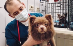 ПЯТЬ заблуждений владельцев, с которыми сталкивается ветеринарный врач на приеме