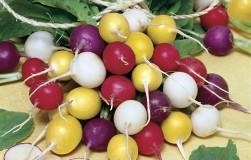 Цветной редис: радуга в салате