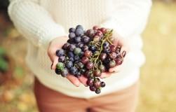 Чтобы виноград не болел: исправляем ошибки прошлого сезона