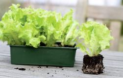Салатика хотите? Посадите!