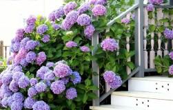 Самые красивые кустарники для вашего сада