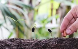 Опоздали посеять семена: как ускорить процесс
