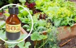 Йодотерапия в огородах и садах
