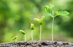Реанимация по-садовому: используйте стимуляторы роста