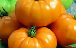 Раз – и треснул, или почему трескаются помидоры