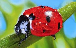 Полезные насекомые: друзей надо знать в лицо