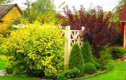 Украсьте ваш сад