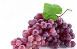 Отличные сорта винограда для новичков