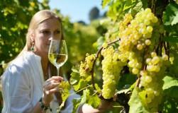 Сорта для вина и соков