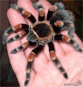 Насекомые, пауки, скорпионы
