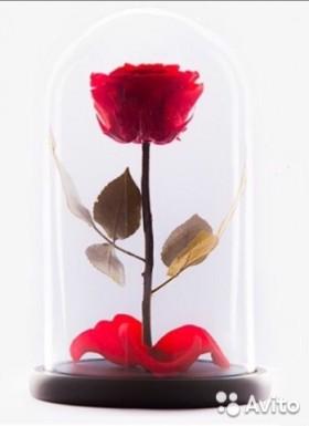 Вечная / Стабилизированная роза в колбе розница