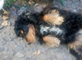 Пропала собака!