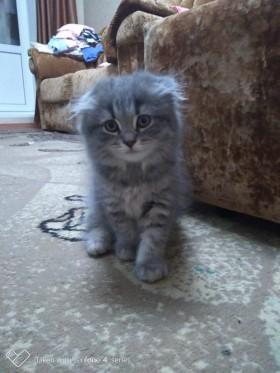 Срочно!!!!! Отдам красавицу кошечку в добрые и заботливые руки.